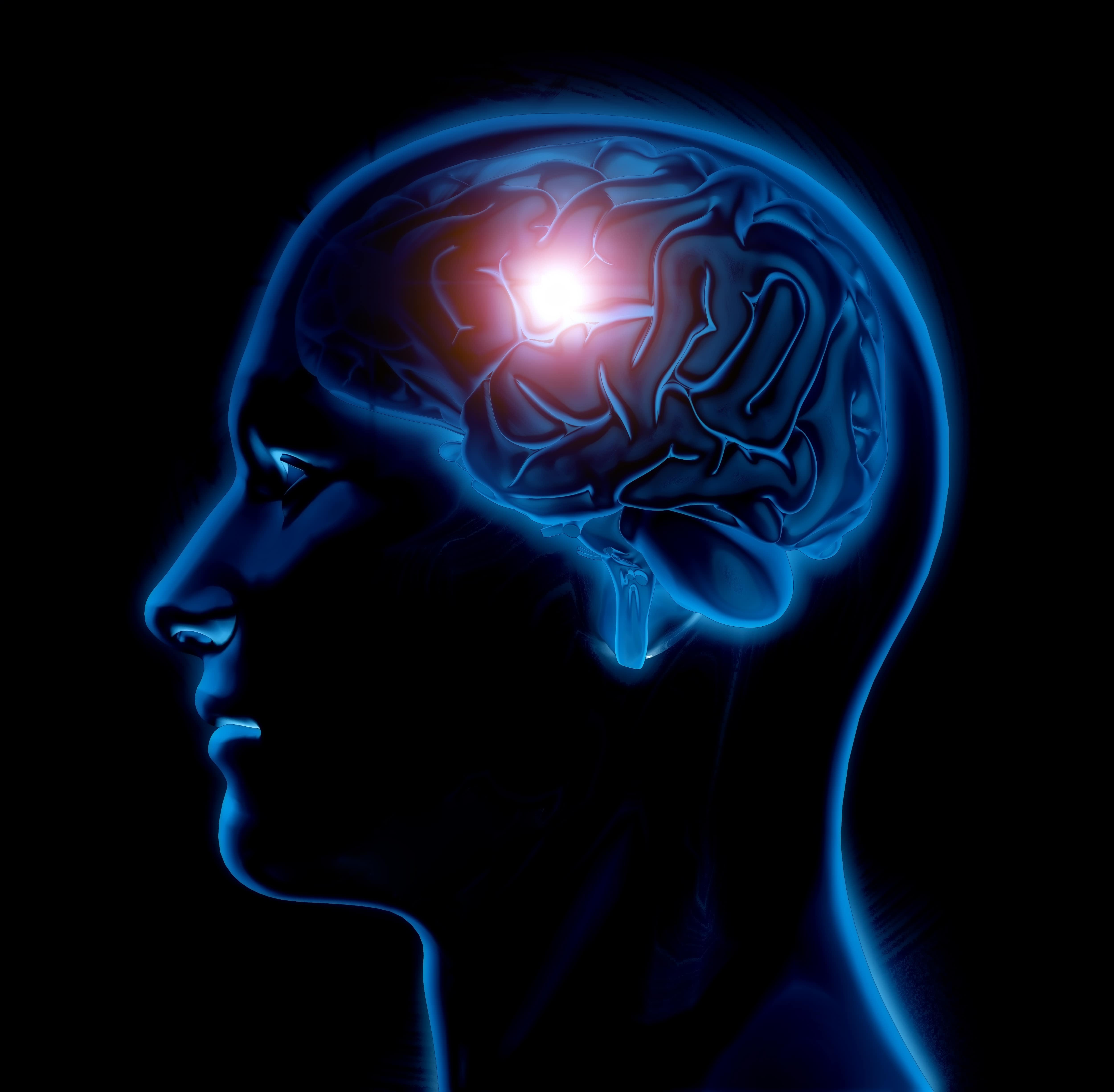 bagian otak manusia